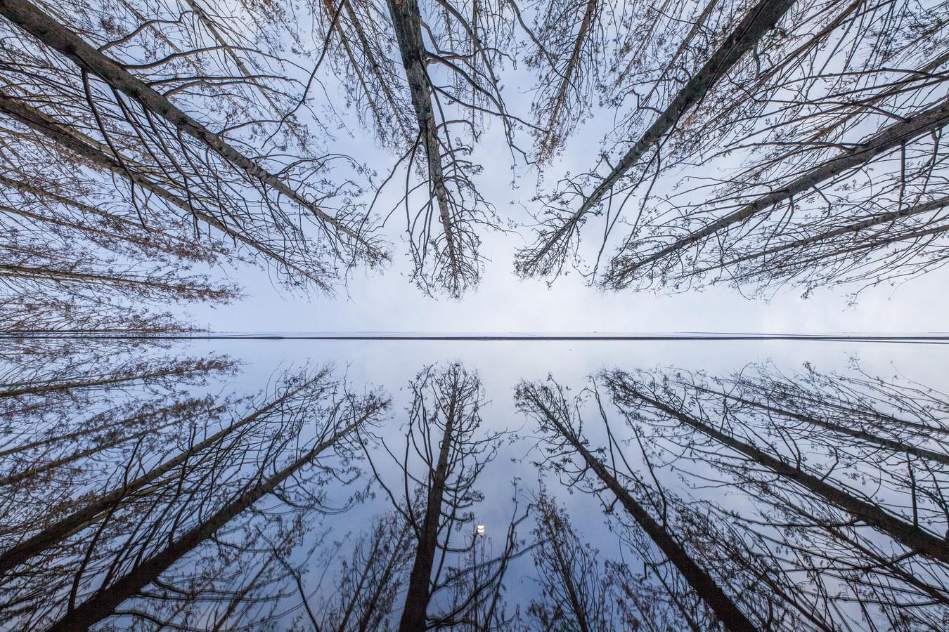 调整大小 12_mirror_01.jpg