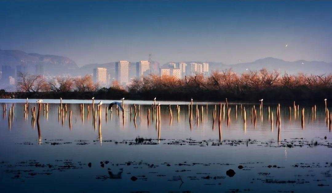 昆明招商 · 依云国际社区  景观设计  / 上海日清景观
